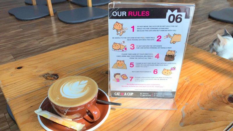 チェンライにある最強の猫カフェ「CAT 'n' A CUP Cat Cafe」は広々とした空間でかわいいネコたちと触れ合える
