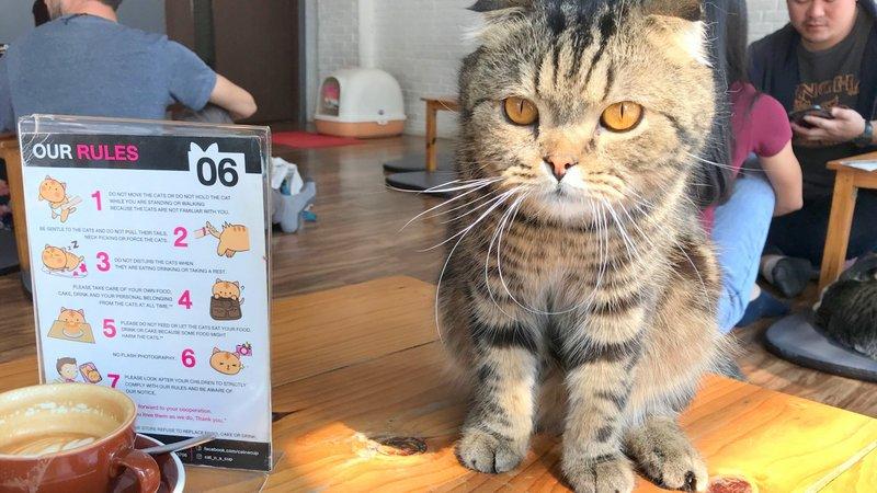 チェンライにある最強の猫カフェ「CAT 'n' A CUP Cat Cafe」はバスターミナルから歩いてすぐ