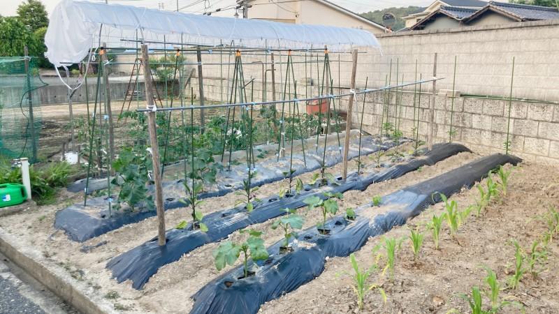家庭菜園で育てる夏野菜栽培日記:5月